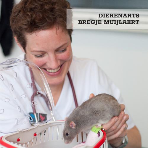 Dierenarts Bregje Muijlaert