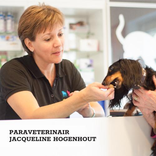 Jacqueline Hogenhout